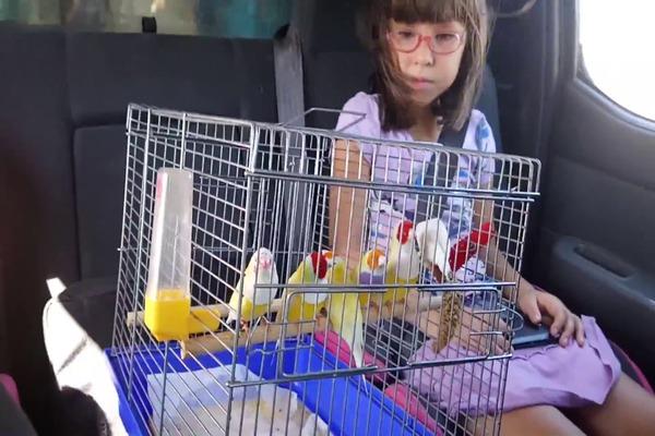 Перевозка птиц в машине