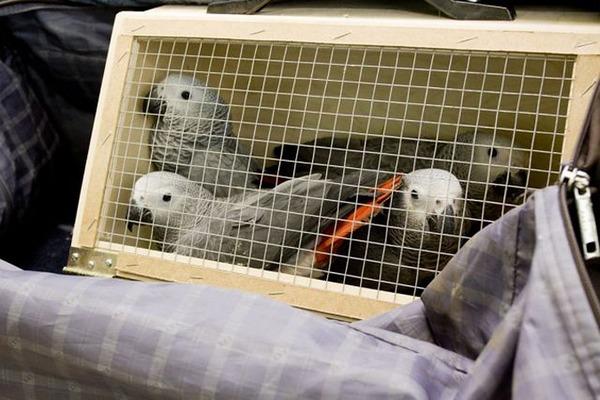 Клетка для перевозки птиц поездом