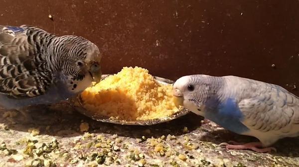 Птички кушают хлебное изделие