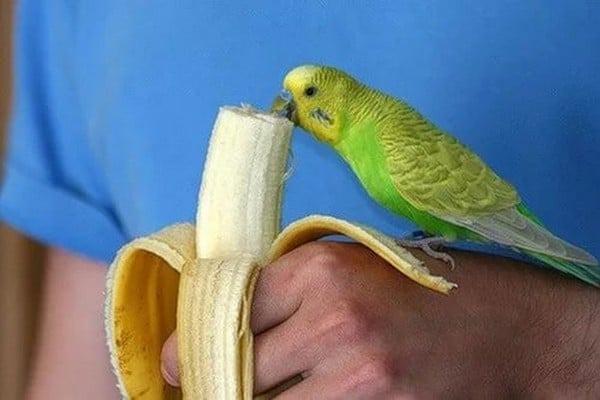 Птичка кушает банан