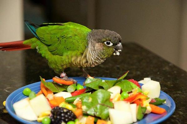 Полноценный рацион попугая