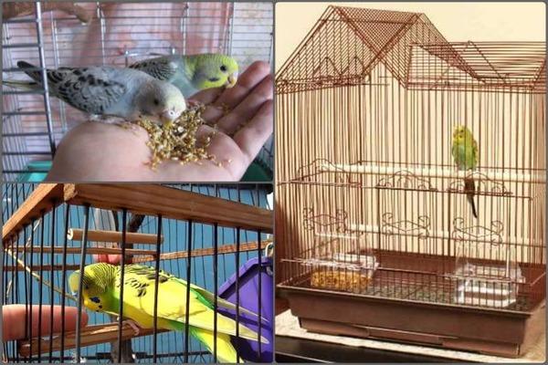 Ищем способы развлечь птиц