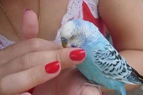 У попугая вирусное заболевание