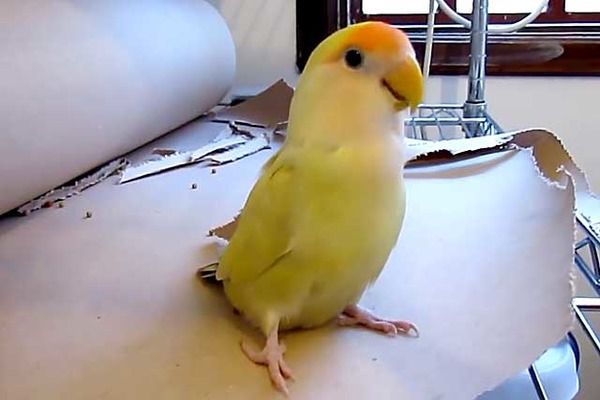 Птичка больна орнитозом