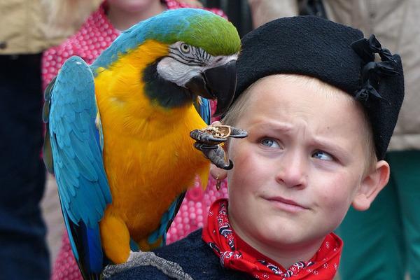 Аллергия на попугайчика