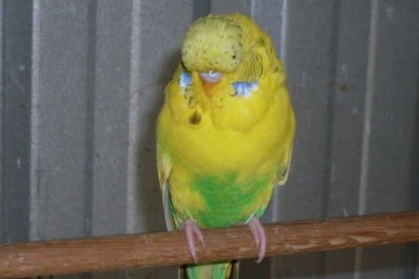 Наблюдаем за здоровьем птицы