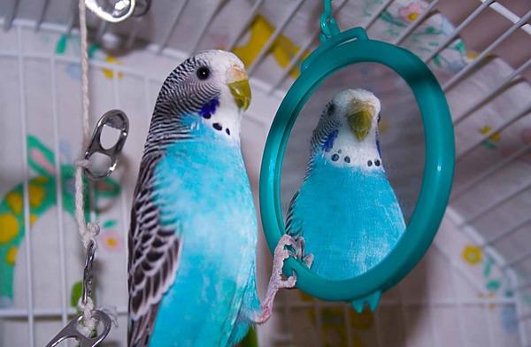 Общение с зеркалом