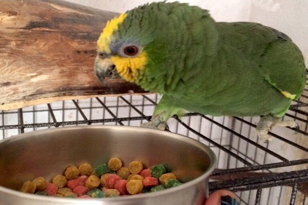Фрукты в меню попугая