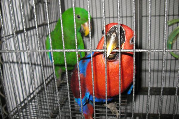 Жилище для попугаев