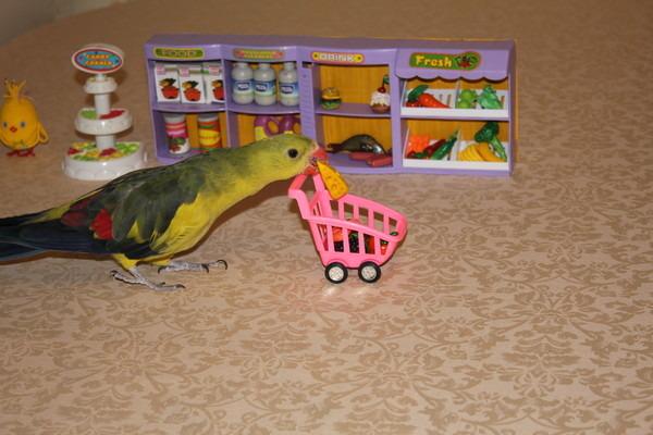Попугай знакомится со своими игрушками