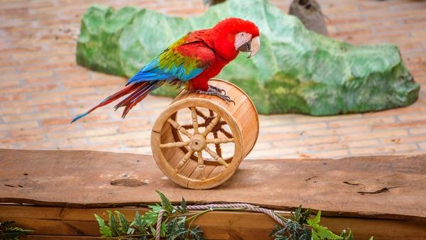 Любимое занятие попугая