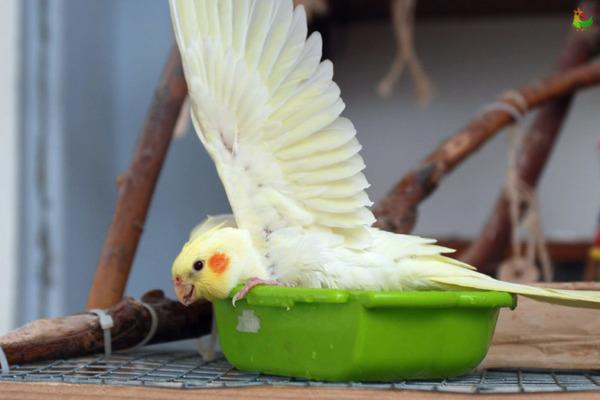 Соблюдаем правила купания птицы