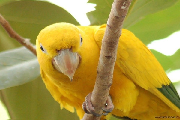 Птичка с желтым опереньем