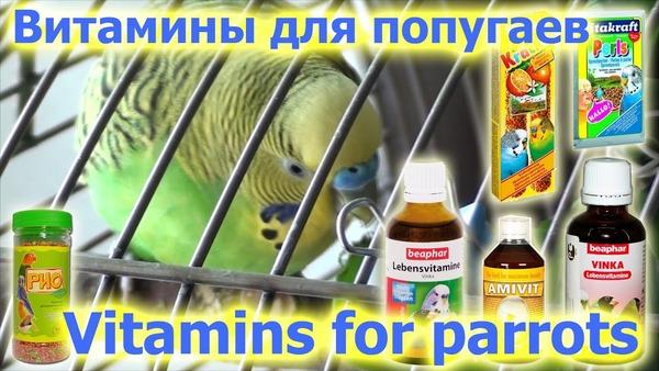 Профилактика для повышения иммунитета птицы
