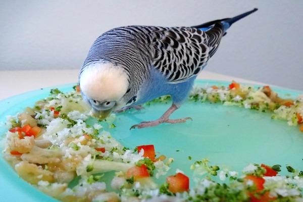 Фрукты в меню попугайчика