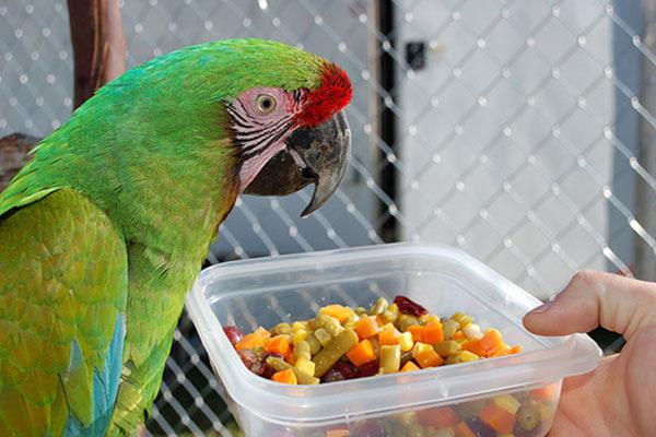 Способ кормления попугая бананами