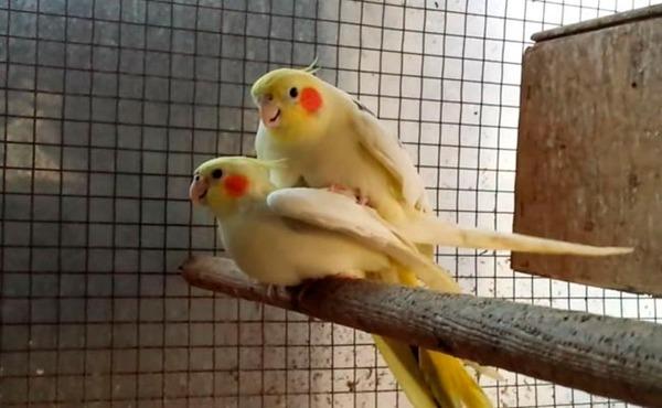 Птицы готовы к размножению