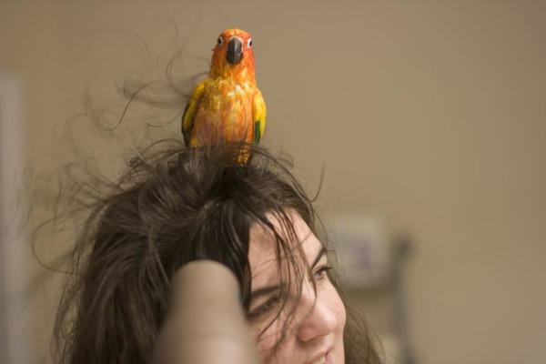 Минусы содержания попугаев