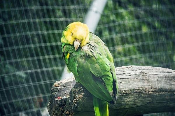 Попугайчик отравился