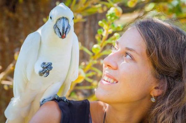 Возникновение аллергии на птиц