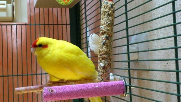Стресс и его роль в изменении поведения птицы