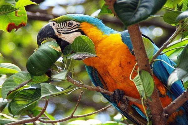 Питание диких птиц