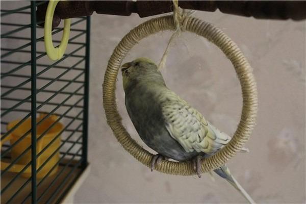 Любимая игрушка попугая