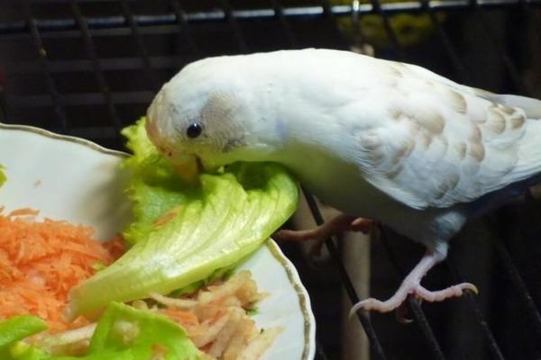 Меню попугая