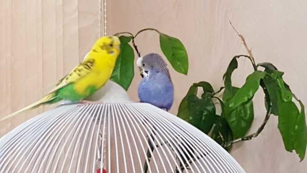 Любознательные птички