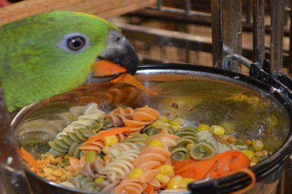 Обед попугая