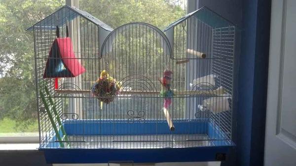 Клетка с попугаями на подоконнике