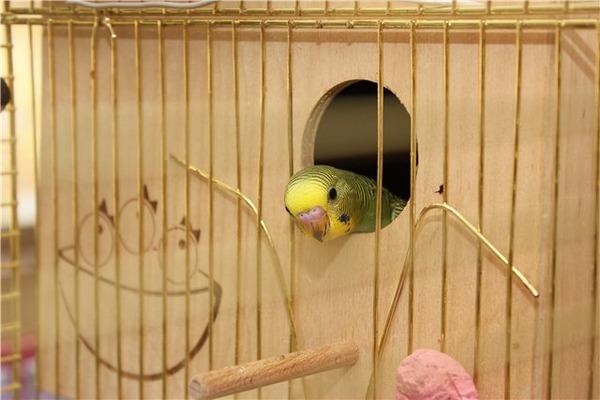 Гнездовой домик