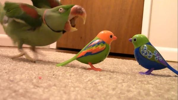У попугая стресс