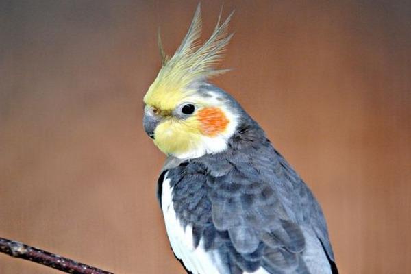 Креативная кличка попугая