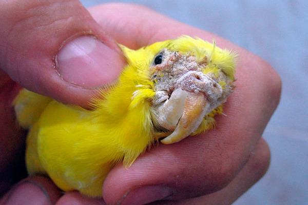 У птицы клещы