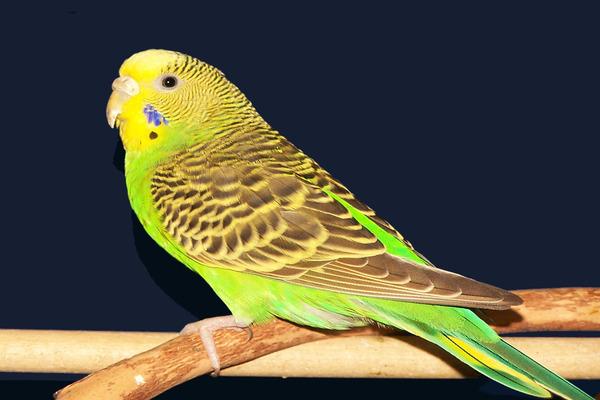 Экстравагантное имя у птички