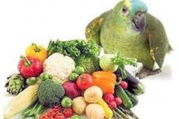 Овощное меню пернатого