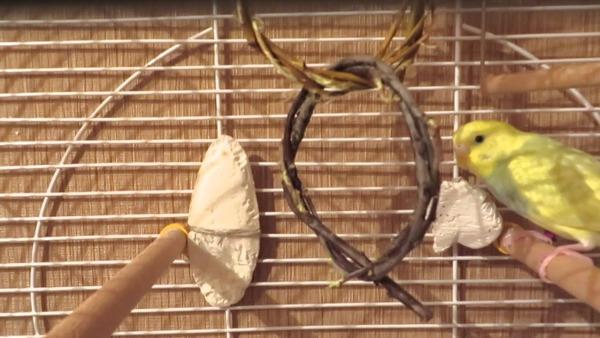 Сепия и мел для попугая