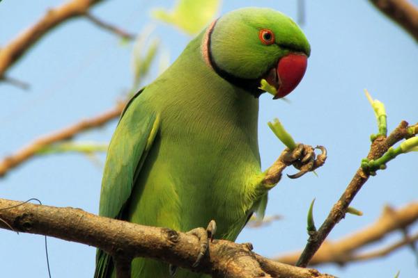 Свободолюбивая экзотическая птица