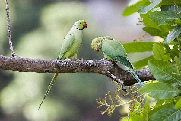 Жизнь попугаев в дикой природе