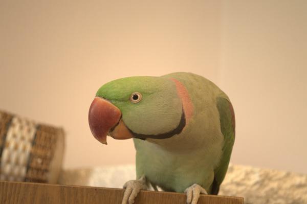 Птица проявляет характер