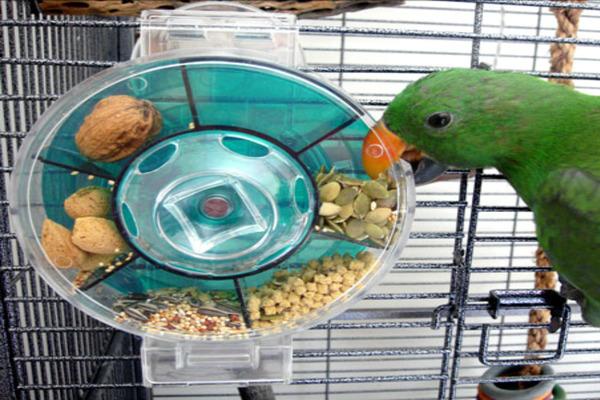 Автоматическая кормушка для попугаев