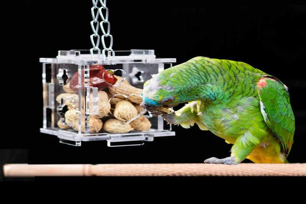 Аксессуар для пищи попугаю