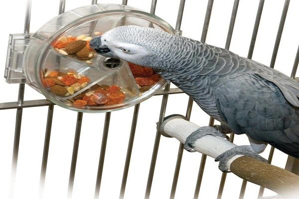 Вид кормушки для попугая жако