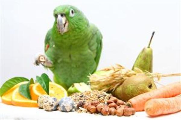 Составляем правильный рацион питания пернатого питомца