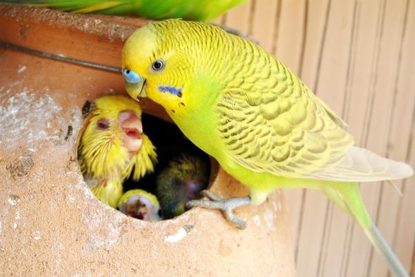Самец кормит самку