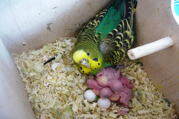 Развитие птенцов