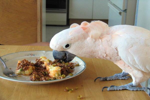 Питание попугая какаду