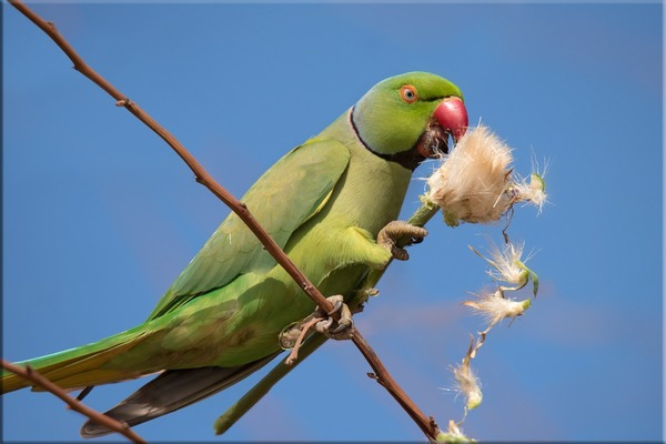 Попугай в природной среде