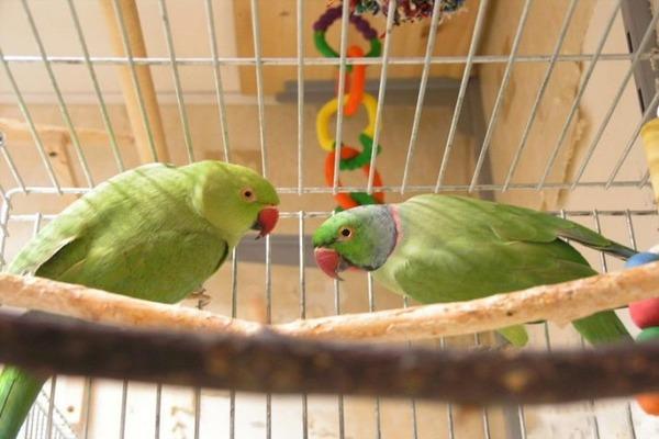 У попугаев отсутствует аппетит